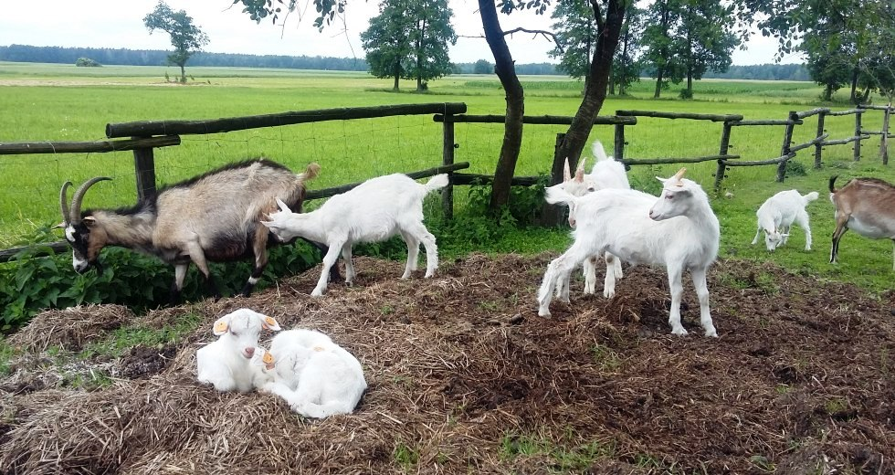 Dziecięco-kozia symbioza